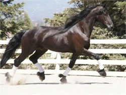Get the Most Out of Your 'Quirky' Horse